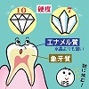 iPS細胞を使って歯のエナメル質発生の謎に挑む