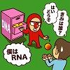 遺伝情報発現の仕組みを知る「RNAの研究」