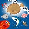 養殖業の新時代 ~ゲノム解析で病気に強い魚を作る~